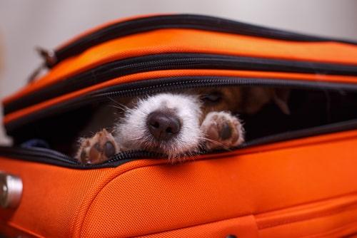 Navidad perros de viaje