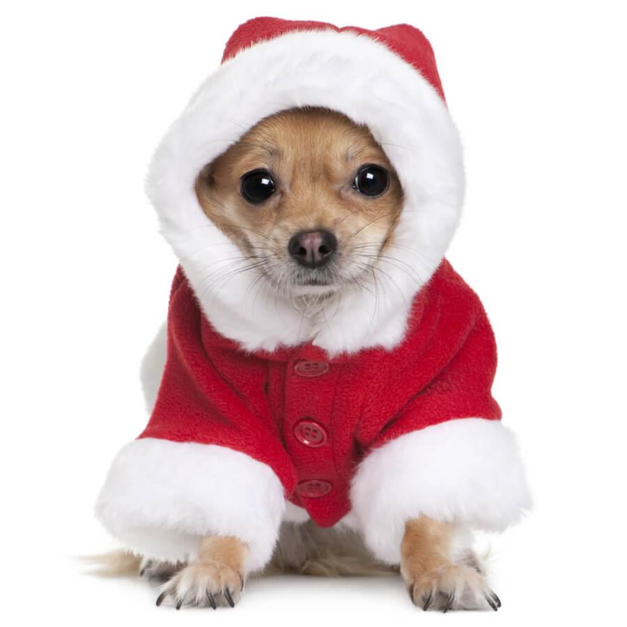 chihuahua traje de navidad para perros