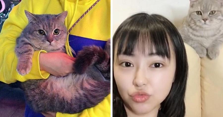 gato munchkin universidad china