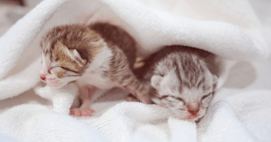 gatos recien nacidos