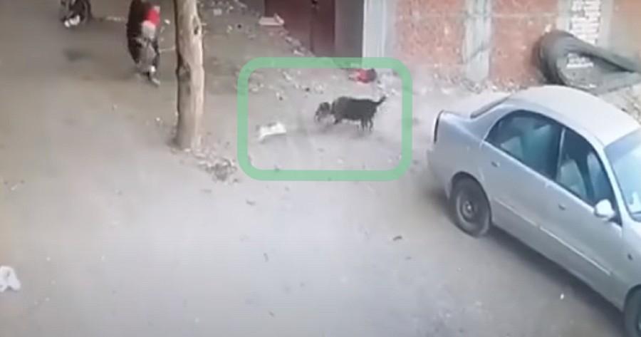 pelea gato perro calle camara seguridad