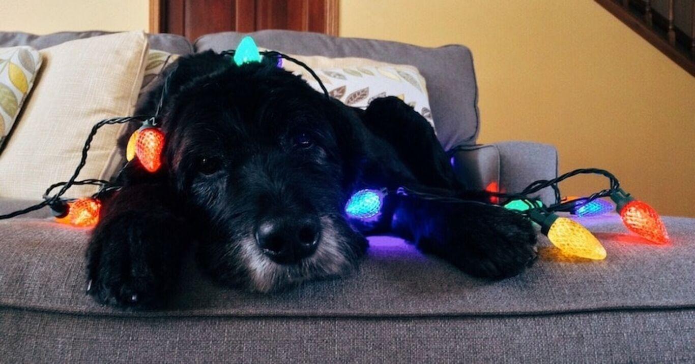 perro negro con luces de navidad