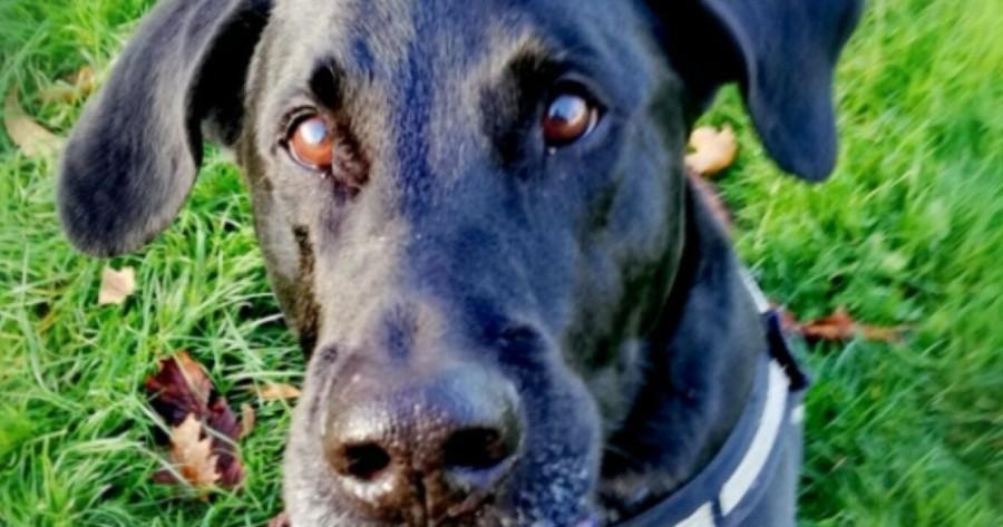 perro negro primer plano bosco abandonado