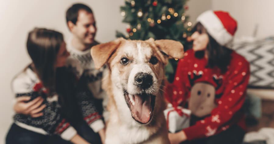 perro con familia arbol de navidad