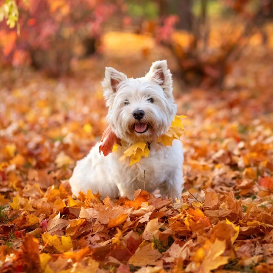 westie razas de perros blancos