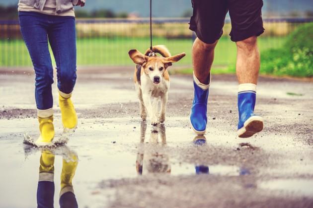 perro de paseo en la calle un dia de lluvia