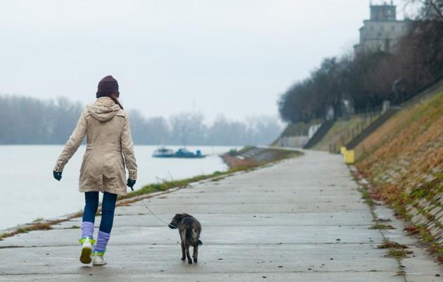perro de paseo en el mar un dia de lluvia