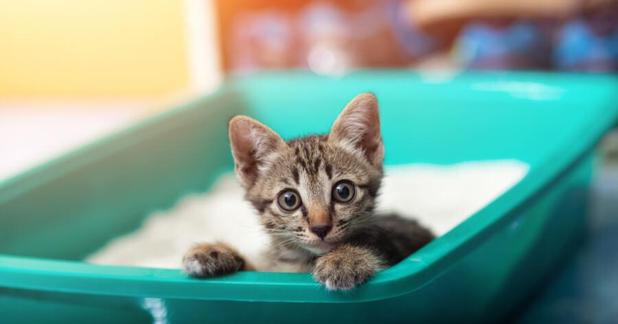 gato en el arenero alergia humanos