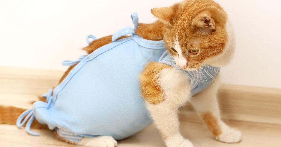 castrar gato para combatir alergia