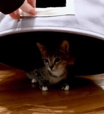 gato escondido en el cesto de la ropa