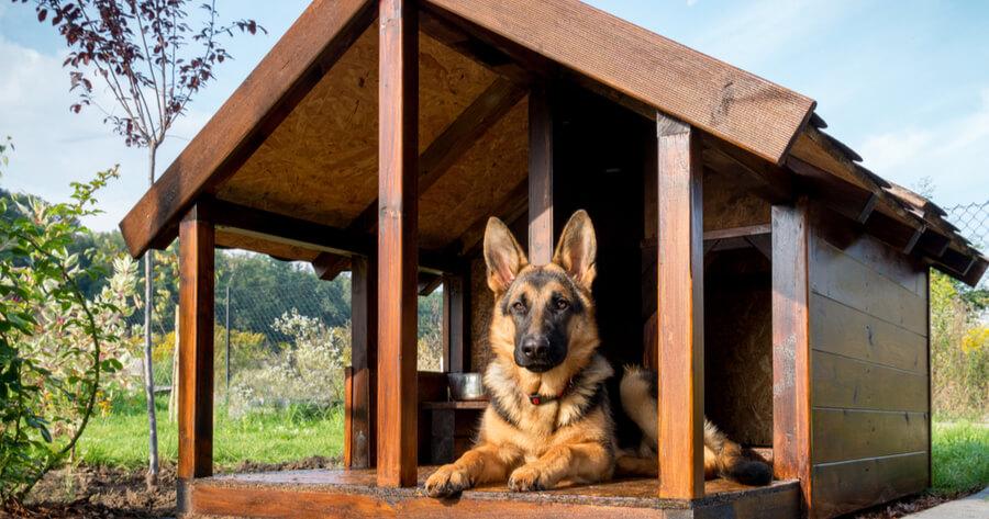 caseta de madera perros pastor aleman