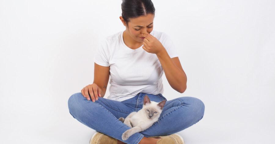 pedos gatos malolientes