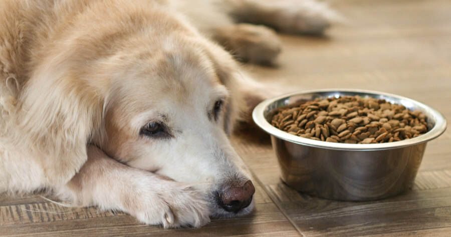 falta de apetito perro sistema inmune debil