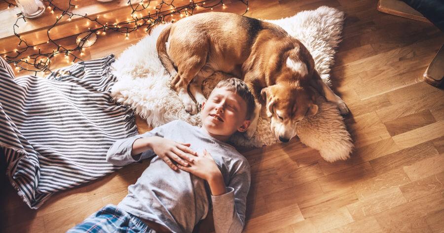 perro salon humano