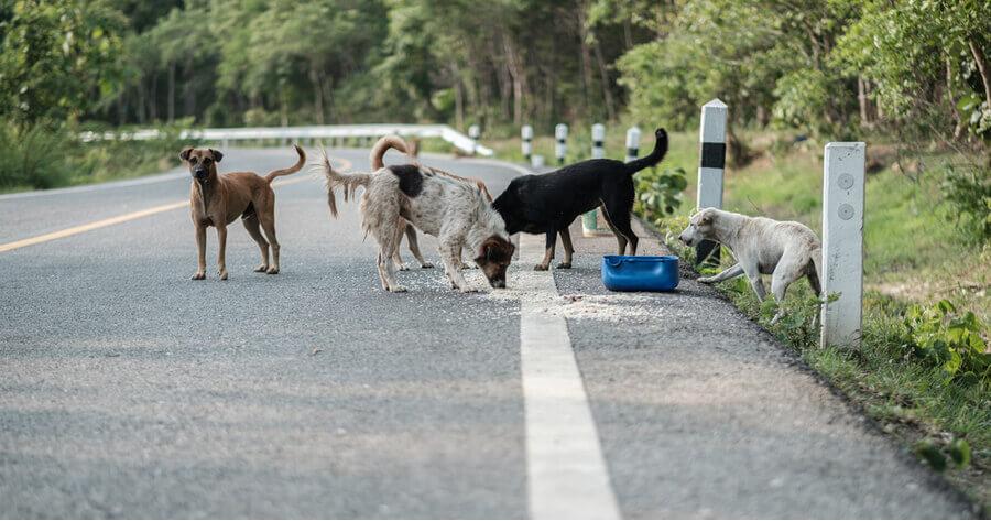 caceria perros asilvestrados