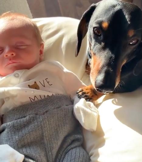 perro salchicha bebe