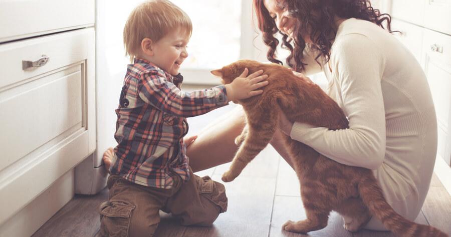 familia alergica a los gatos