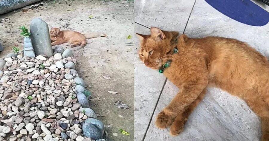 gata naranja visita tumba dueño