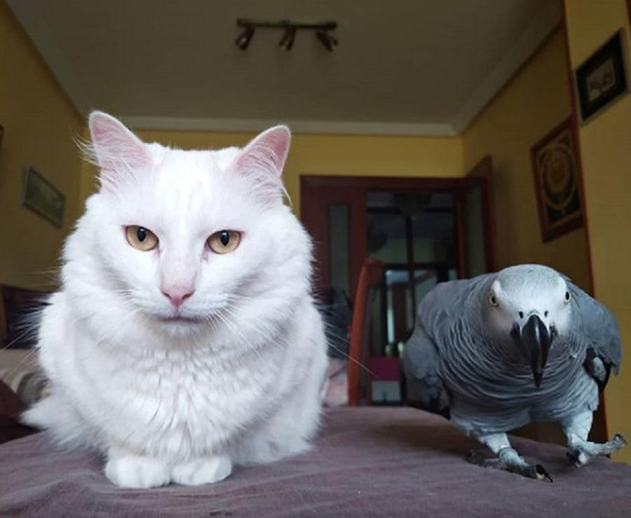 gato blanco y loro juntos en una mesa