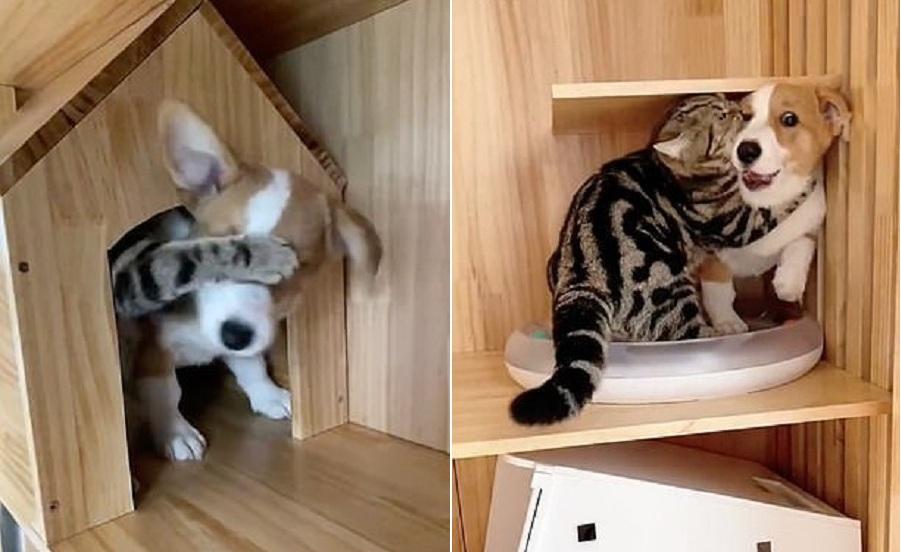 gato impide que perro se mueva