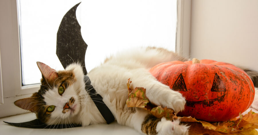 gato batman riesgos halloween