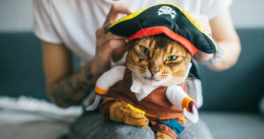 gato disfraz halloween casa riesgos