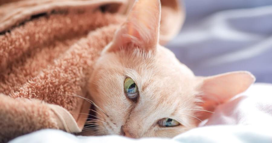 gato enfermo cancer casa