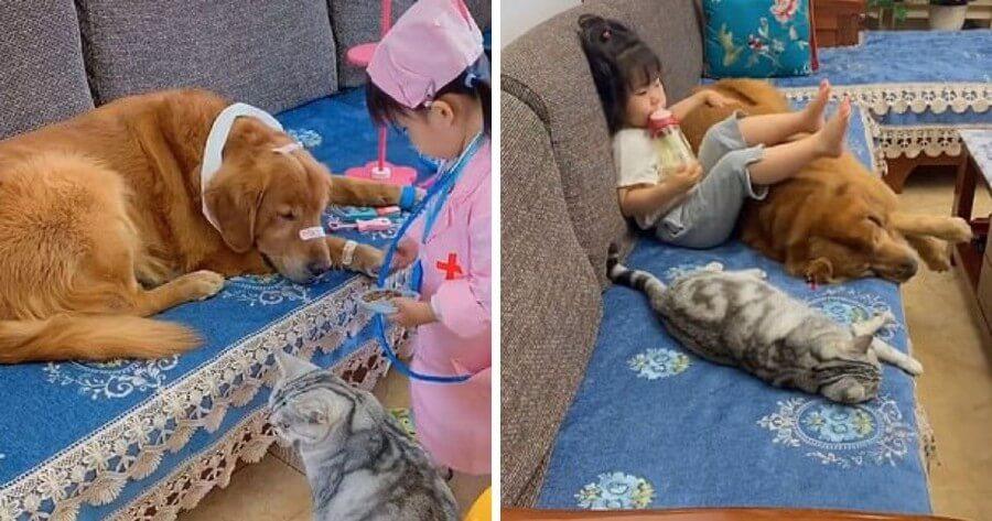 niña juega perro gato
