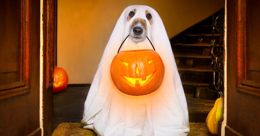 perro fantasma halloween riesgos