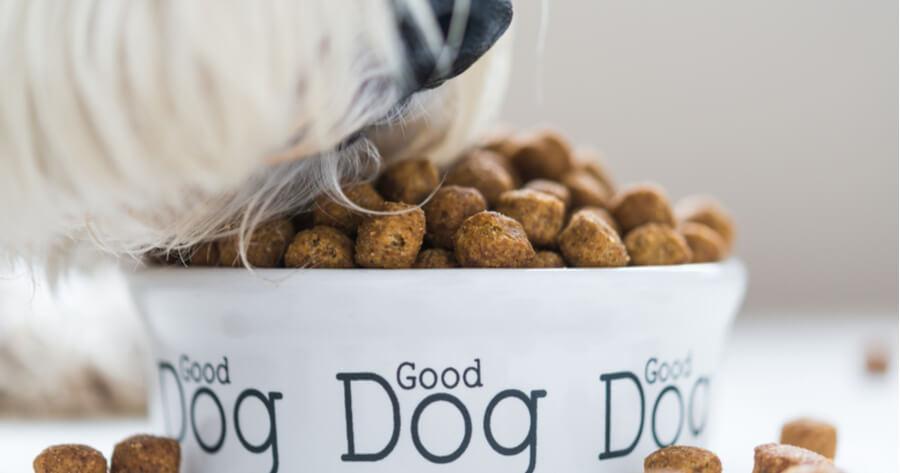 primer plano perro comiendo alimento orgánico