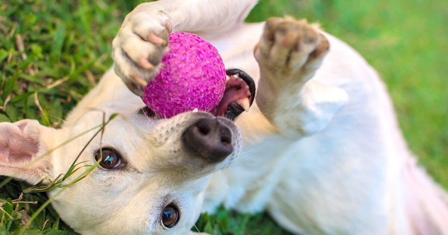 adaptacion perro adoptado jugar pelota