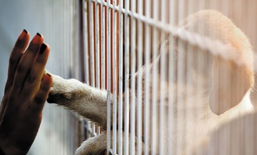 adopta perro refugio dog lovers day