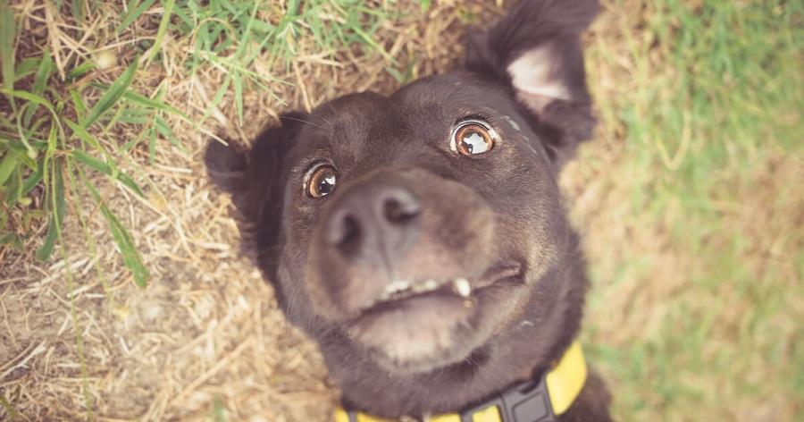 perro cachorro dientes