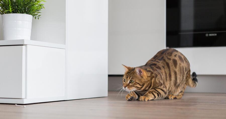 adoptar gato primeros dias casa