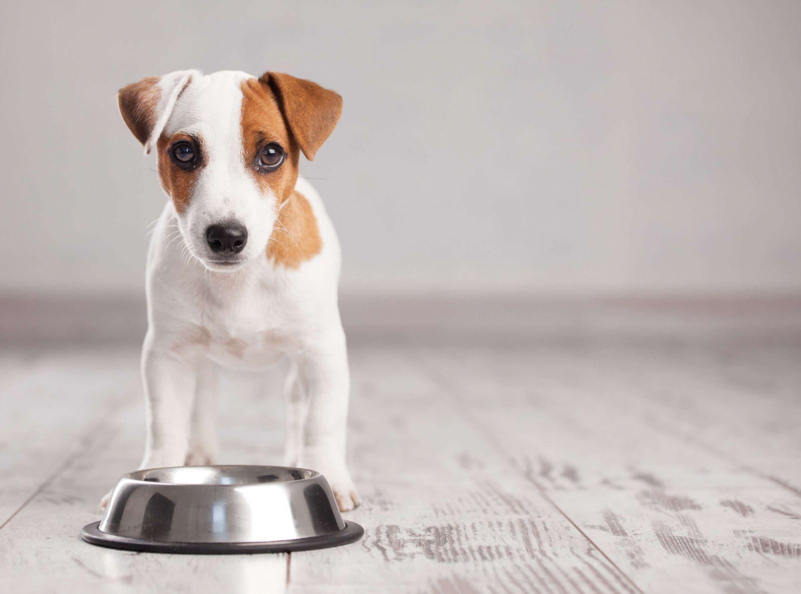 cachorro no quiere comer pienso