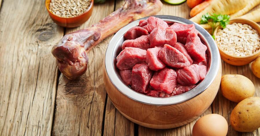 carne comida perro dog lovers day