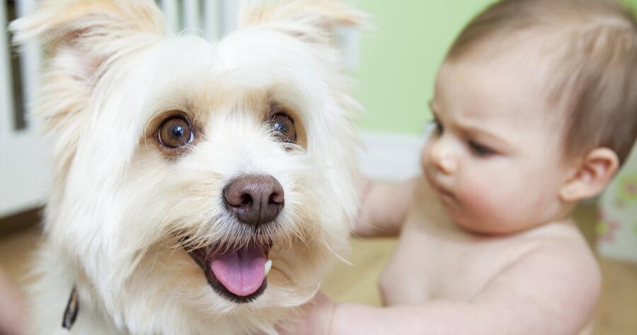como jugar niños perros