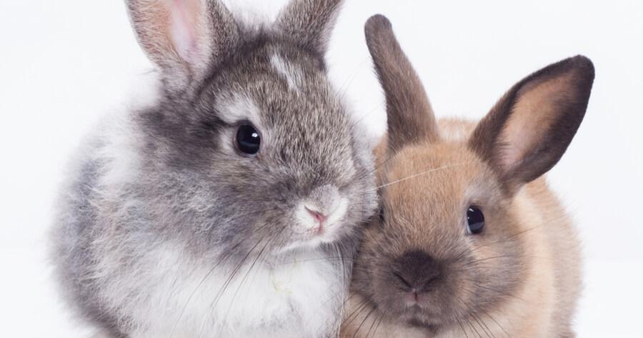 conejos amor