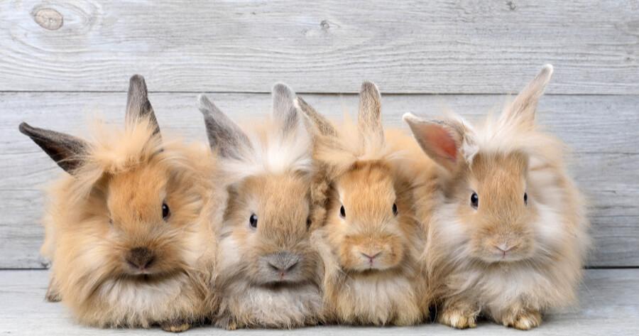 conejos grupo