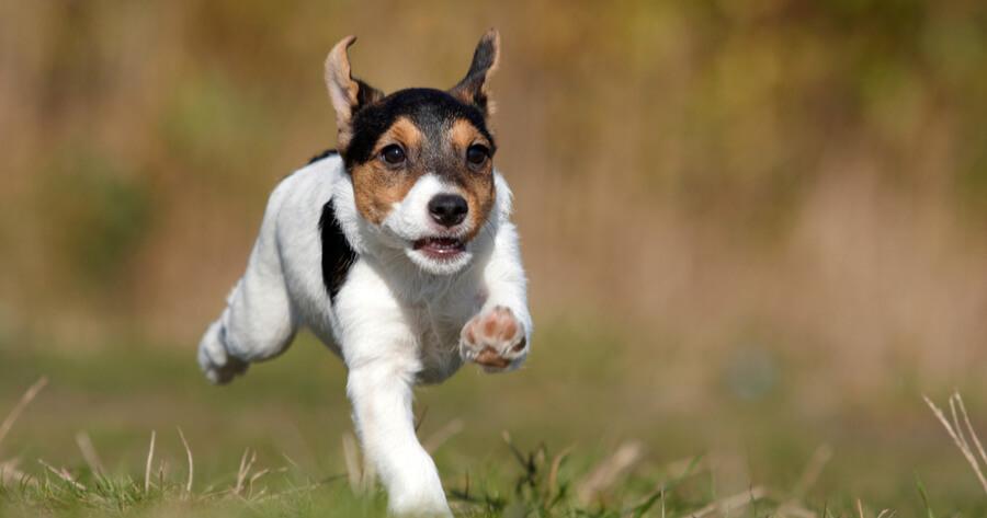 consejos adoptar perro cachorro
