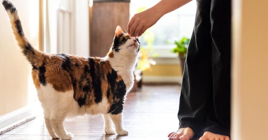 cuidados necesarios gato