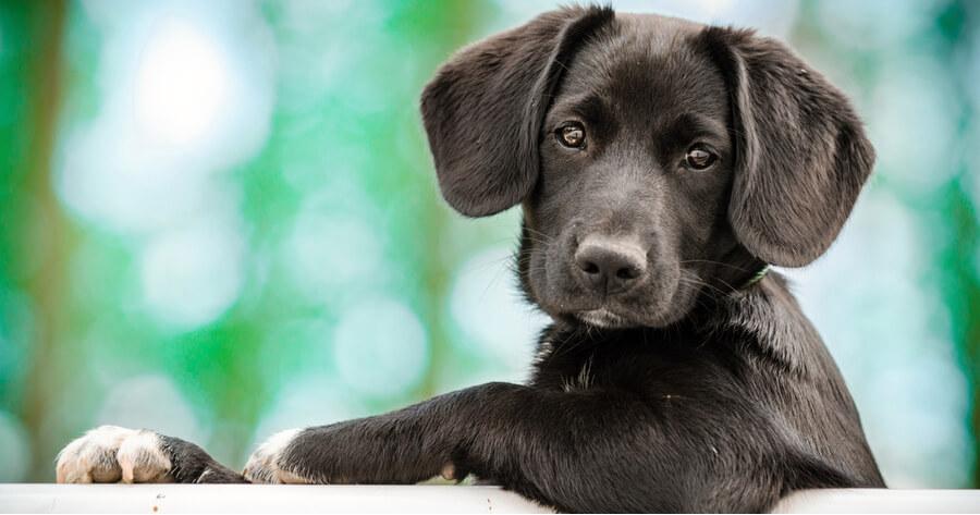 perro tratado con antibiótico