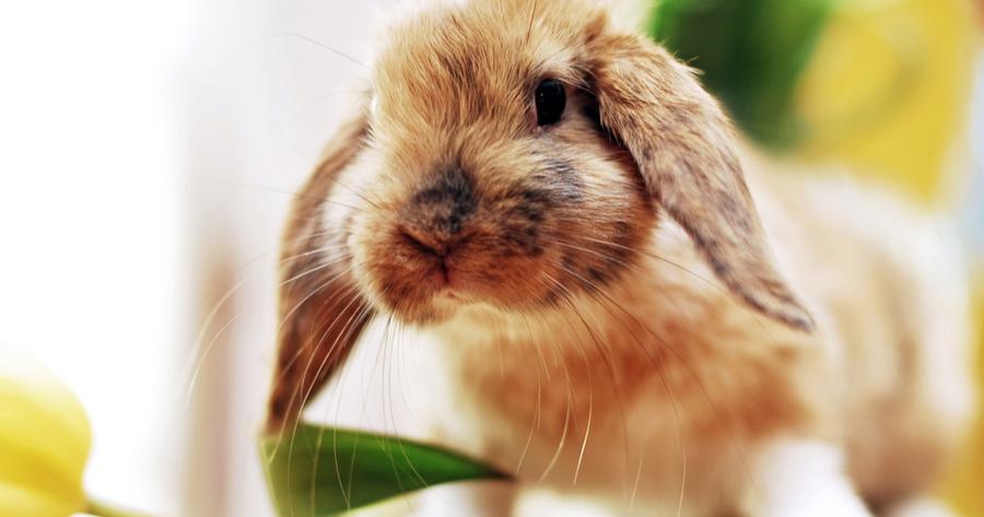 dia del conejo