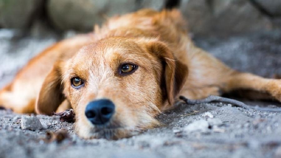 dog lovers day perro espera adopcion
