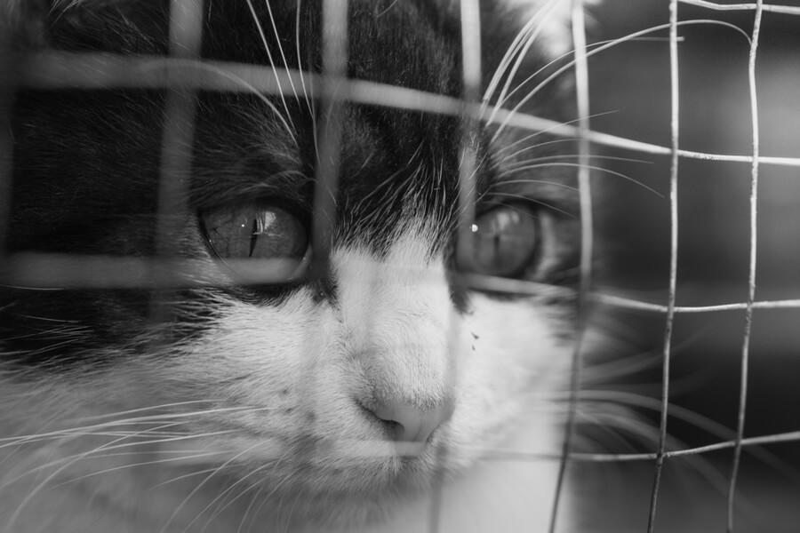 gato para adoptar protectora