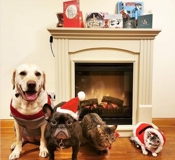 animales instagram fiesta navidad