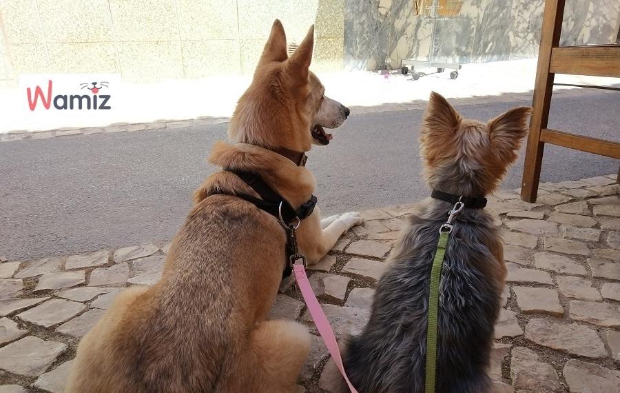 pasear perro suelto