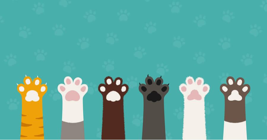 patas perros gatos celebran ley biniestar animal