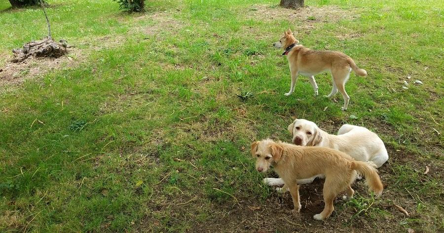 pazo as casas galicia perros jugando