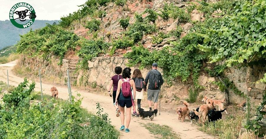perriturismo vinedo malcava galicia con perros